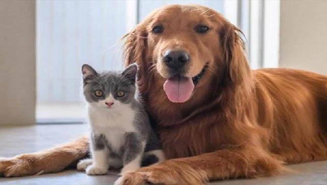 Operativo de vacunación antirrábica para perros y gatos